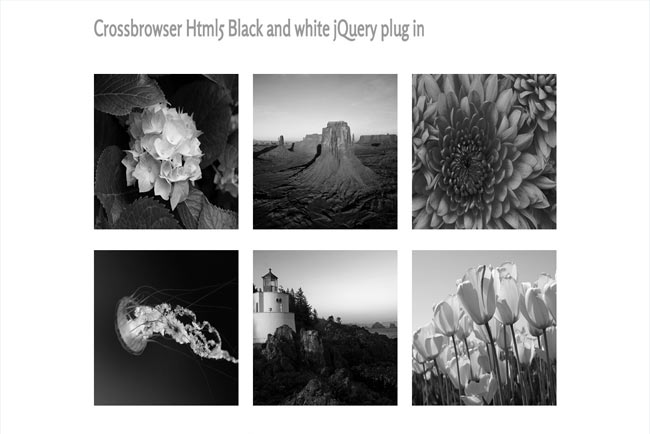 BlackHover - Html5 Black and white image hover effect jQuery